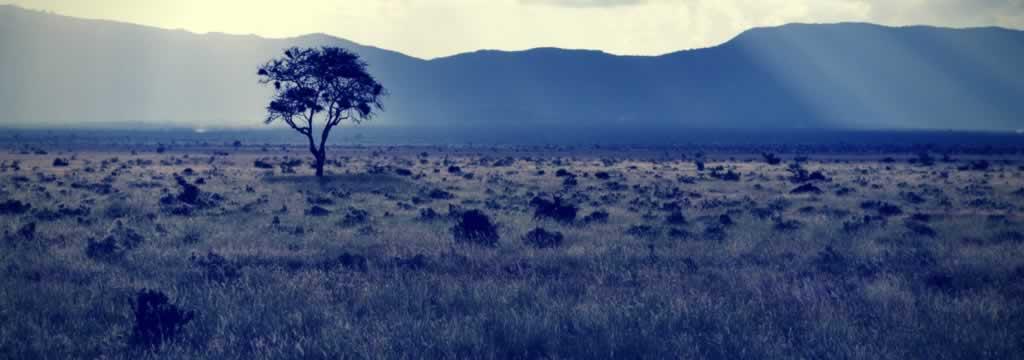 Understanding Land Banking Investment Schemes